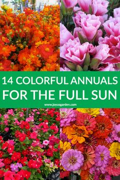 14 Colorful Summer Annuals for the Full Sun. Need some summer annuals that are easy to grow and manage in the full sun? These colorful flowers are sure to brighten up any garden. All are suited to for container gardening too. Full Sun Container Plants, Full Sun Plants, Container Flowers, Container Gardening, Vegetable Gardening, Organic Gardening, Sun Loving Plants, Succulent Containers, Plants That Like Sun