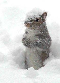Squirrels make me happy :)