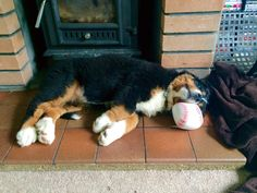 Not just a toy.... makes a comfy pillow also!