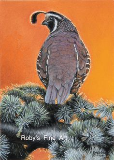 Limited Edition Wildlife, Still Life, and Seascape Prints by Roby Baer