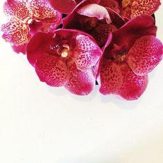 Loving orchid season!! #flowers #flowersofinstagram #floral #pretty #thatsdarling #flowerslovers #flowermagic #florist #blooms #floweroftheday #calledtobecreative #mybeautifulmess #livecreatively #flashesofdelight #photosinbetween #lovelysquares #pursuepretty #vscoflowers  #happyheart #slowfloralstyle #dspink #stylingtheseasons #ccseasonal  #floralperfection