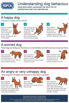 Understanding dog behaviour