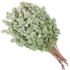 FiftyFlowers.com - Gum Drop Fresh Cut Eucalyptus