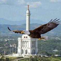 Águilas cibaeñas