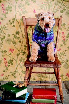 Ravelry: Dog Sweater pattern by Astor Tsang