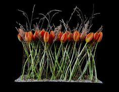 Photo via Fleurs et Fleurs