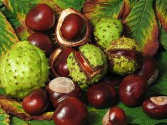 "cotton-balls: "" i saw sweet chestnuts in the supermarket today….oh my, is it almost winter? """