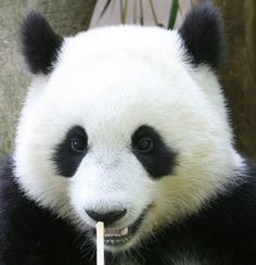 Closeup of Su Lin | Karl Drilling | Flickr