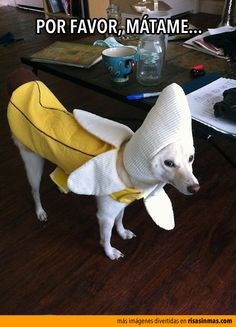 Por favor, mátame... y así dejo de sufrir con este disfraz de plátano.