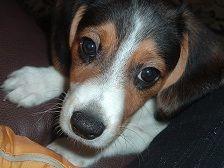 Daisy! #BarkPost.
