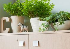office plants. http://www.freshinterior.me/plants-for-your-office/
