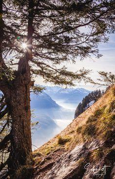 Fotografie von Babies, Kindern und Hunden am Bodensee.  #photography #picoftheday #naturephotography #naturfotografie #naturliebhaber #alpenliebe #badenwürttemberg #bodensee #thurgau #konstanz #frauenfeld #winterthur #schaffhausen #grossermythen #vierwaldstättersee Schmidt, Winterthur, Mountains, Nature, Photography, Travel, Lighthouse Hotel, Konstanz, Nature Photography