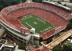 between the hedges in Athens, GA