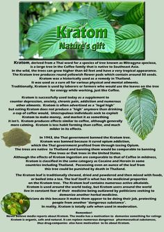 : ) kratom - You can find all your smoking accessories right here on Santa Monica #Kratom #Teagardins #SmokeShop