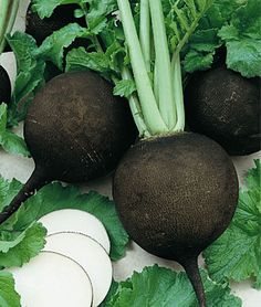 """Radish, Black Spanish Round  A winter variety popular in Europe since the 1500s. Crisp, pungent, spicy white flesh.  Black radishes have been grown and savored in Europe since the 1500s. With handsome black skins, the large 3-4"""" turnip-shaped globes have crisp, pungent, spicy pure-white flesh. A winter variety valued for its strong medicinal properties, ease of growth, and long storage."""