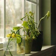 Plants Not Flowering