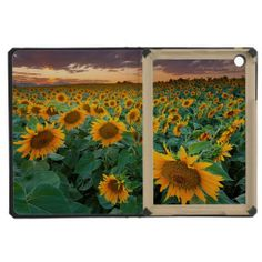 >>>Low Price          Sunflower Field in Longmont, Colorado iPad Mini Covers           Sunflower Field in Longmont, Colorado iPad Mini Covers lowest price for you. In addition you can compare price with another store and read helpful reviews. BuyDiscount Deals          Sunflower Field in Lo...Cleck Hot Deals >>> http://www.zazzle.com/sunflower_field_in_longmont_colorado_case-256828142822342741?rf=238627982471231924&zbar=1&tc=terrest