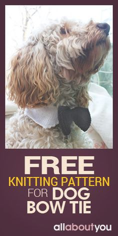 Free Knitting Pattern For Radley Dog : 1000+ images about Ideas for Mom on Pinterest Dog Bow Ties, Bow Ties For Do...