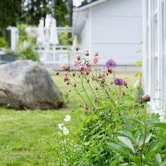 Pilvinen päivä mutta puutarhassa kukkii kauniisti 💗 Mulen dag men det blommar så fint i trädgården #puutarha #trädgård #inmygarden #akileija