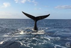 Whale Watching with Pacific Whale Foundation in Maalaea, Maui, Hawaii | Hawaiian Beach Rentals