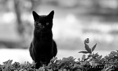 Photograph Black & White by Peyman Az on 500px