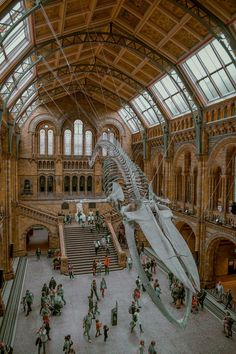 Visit the Natural History Museum - top things to do in london
