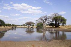 Auf nach Moshi zur Safari – Hier in Tansania ist die Reise über Land recht einfach, denn es gibt viele Busse, die more pictures here https://www.overlandtour.de/auf-nach-moshi-zur-safari/