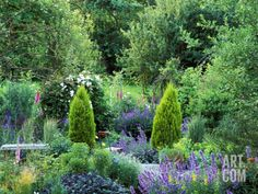 View into Country Garden with Perennials and Small Trees Summer Photographic Print by Lynn Keddie at Art.com
