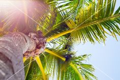#Sunflare and close up #palm tree – CreativityGems