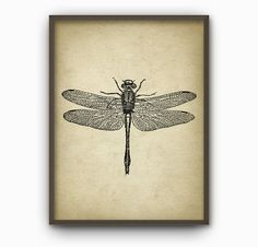Dragonfly Wall Art Poster Dragon Fly Home Decor by QuantumPrints