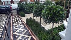 Balham Front Garden Company London Wandsworth Battersea Contact anewgarden for more information Patio Trees, Potted Trees, Garden Trees, Garden Pots, Victorian Front Garden, Victorian Hallway, Bay Trees In Pots, Front Yard Patio, Small Front Gardens