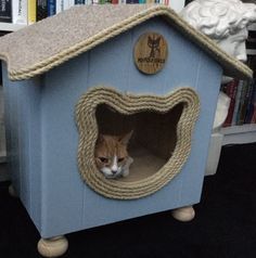 Bubbles enjoys his #catcottage in the #Netherlands  www.myfourcats.com
