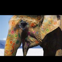 Painted elephant parade in Jaipur, India.. where elephants are treated as royalty.:)