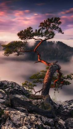 Sosna na szczycie Sokolica - Tapeta na telefon Pine on the Sokolica peak - Wallpaper for phone Scenic Photography, Landscape Photography, Nature Photography, Beautiful World, Beautiful Places, Beautiful Pictures, Landscape Photos, Landscape Paintings, Unique Trees