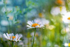 https://flic.kr/p/tLXncT | Flower talks