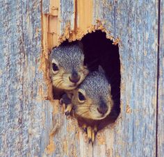 Picture Used on NSVH.  October is Squirrel Awareness Month Album.  Squirrels!