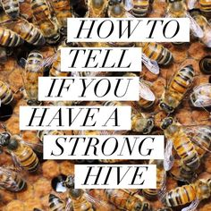 Assessing your hive's strength is an important skill for new beekeepers to learn. Many help resources for new beekeepers will reference strong hives versus weak hives and call upon the beekee… Bee Facts, Honey Bee Hives, Honey Bees, Beekeeping For Beginners, Bee Supplies, Raising Bees, Bee Boxes, Backyard Beekeeping, Beekeeping Course