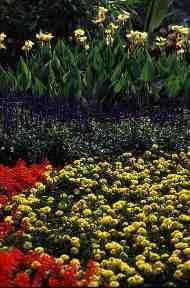 Garden Photography - Tips For Capturing The Gardens Splendour Garden Photos, Go Outside, Amazing Gardens, Photography Tips, Plants, Poster, Beautiful, Photo Tips, Planters