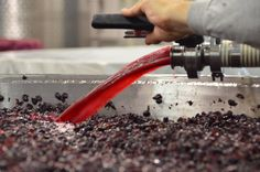 As the wine grapes go thru a 'cold soak' the wine at the bottom is pumped onto the top (pump overs).    Youngberg Hill, Oregon Wine Country