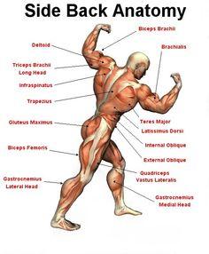 Side Back Anatomy