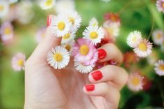 Daisies & coral nail polish Coral Nail Polish, Coral Nails, Loving Your Body, Daisies, Pastels, Wild Flowers, How Are You Feeling, Garden, Floral