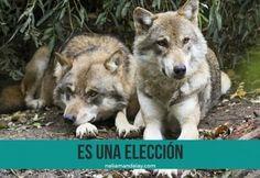 La leyenda de los dos lobos.