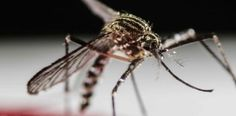 Declaran zona de Miami libre del zika tras fumigaciones:...