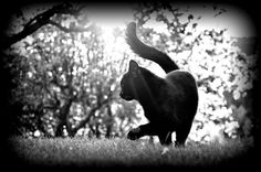 Black and white ❤ black cat ❤
