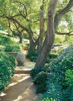 Moraga Vineyard - native Oaks and California Lilac (Ceanothus griseus horizontalis 'Yankee Point'). A romantic California garden by Nancy Goslee Power (photo by Tim Street-Porter)