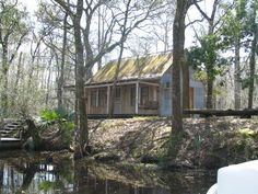 26 Best Louisiana Swamp Pictures Images Louisiana Bayou