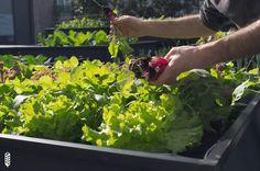 Noocity Growbed. Sistema de huerto urbano eficiente auto-riego y auto-fertilización.
