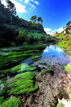 Blue spring near The Waitomo Caves Village - North Island, New Zealand