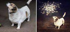 Imagens surreais impulsionam a adoção de animais de abrigo | Ideia Quente
