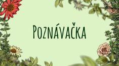 Recepty — Kouzelné bylinky — Česká televize